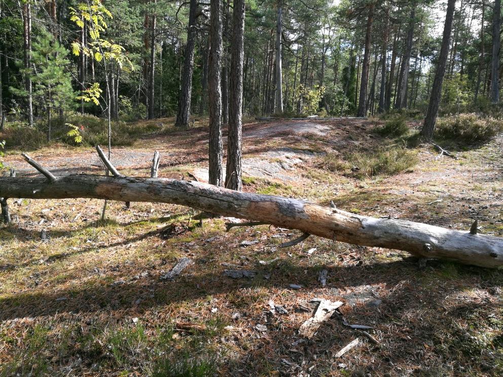 Dating uusi metsä